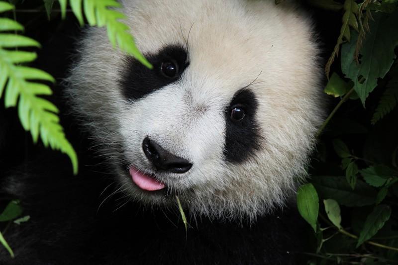 Panda 4.2 – Was bedeutet das Google-Update für meine Website?